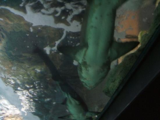 Aquarium La Rochelle: Yeah, that's a shark, above my head!