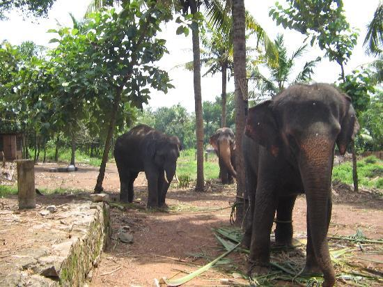 Jangar Cottage B&B: Elephants