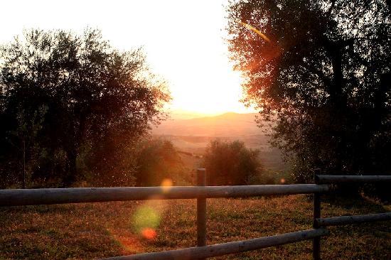 Tenuta La Silva: garden view