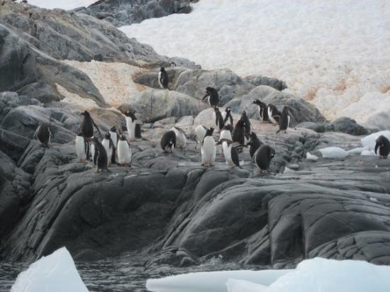 Flock of Penguins   are they called flocks? I mean they are