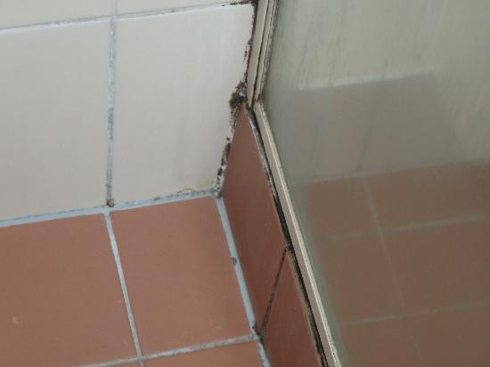 Miami, Australia: Mould  in shower