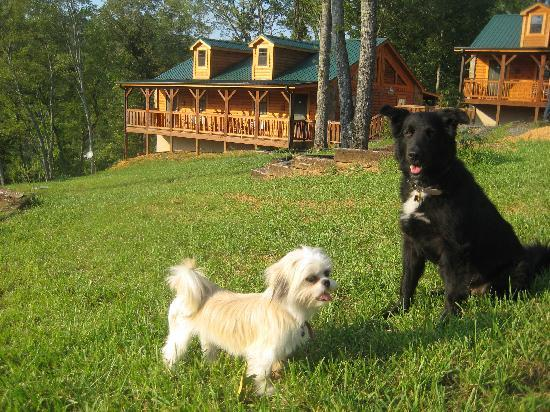Tellico Plains, TN: Our Dogs Loved it in Tellico too!