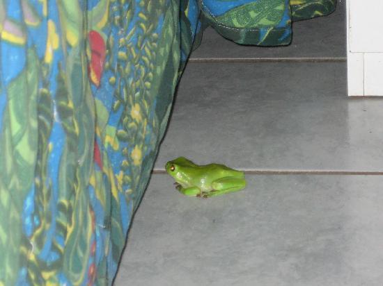 Cape Hillsborough Nature Tourist Park: Little green frog that appeared!