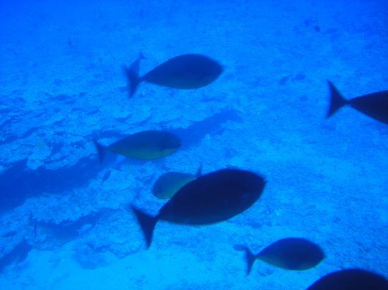 Inside the submarine - Picture of Atlantis Submarines Maui ...