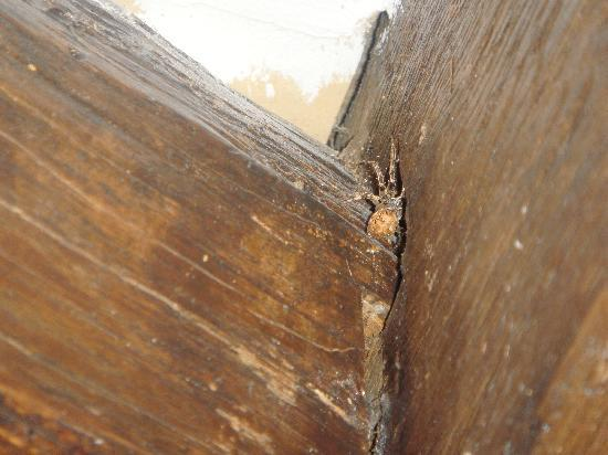 Bourges, Frankrijk: Taken of the spiders crawling through the untreated wood