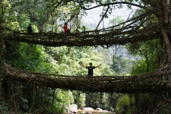 Cherrapunjee, Indien: Double Decker Root Bridge  - Chirrapunjee