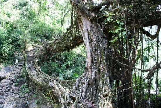 Cherrapunjee, India: Double Decker Root Bridge  - Chirrapunjee