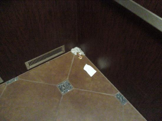 Comfort Suites Smyrna: Trash in elevator there for 3 days. SHAME