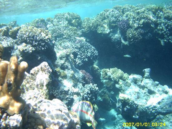 Dessole Aladdin Beach Resort : The coral is right there