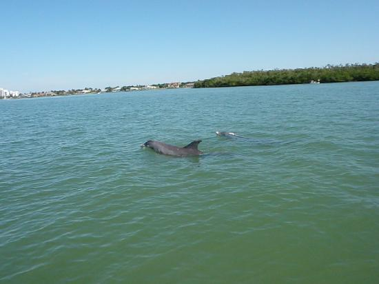 Capt. Ron's Awesome Everglades Adventures: Dolphins