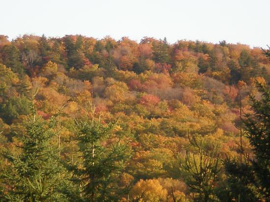 Fall colors near Caribou