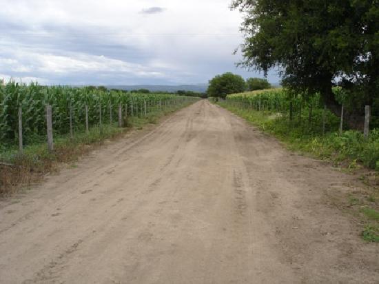 A Farm road inside El Puesto