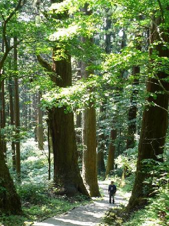 Mt. Haguro : 杉並木を歩いて五重塔を目指します