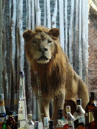 Mara River Safari Lodge: Coffee behind the bar