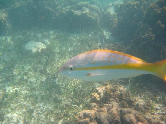 valentin imperial riviera maya excursion snorkeling
