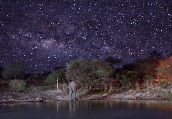 Nata, Botsuana: Ellie Sands water hole at night w/elephant.