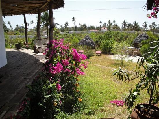 Zanzibar Villas : loads of flowers and birds, butterflys