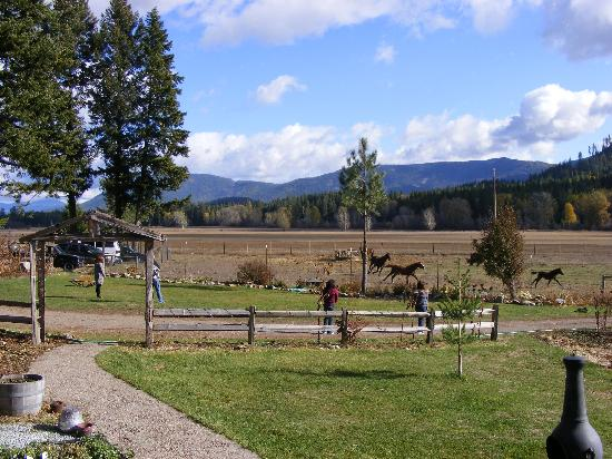 Cedar Mountain Farm Bed and Breakfast : Excellent asmosphere