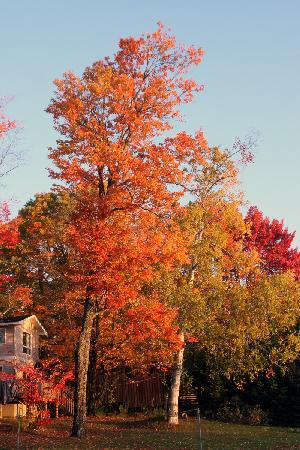 Beauview Cottage Resort: Cottage in the fall colours
