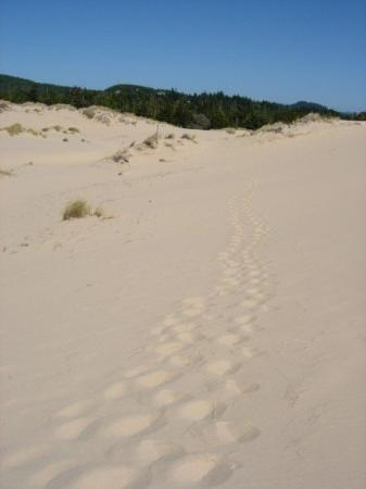 Reedsport, OR : Footprints in the Oregon Sand Dunes.