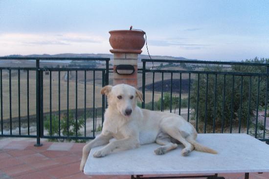 Azienda Agricola Silvia Sillitti : Bianchini - great dog!