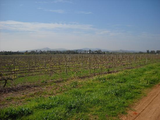 AlphaBed B&B: Winefields at Stellenbosch