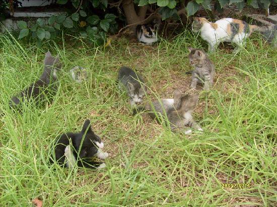 Tagadirt Hotel: Katzen spass