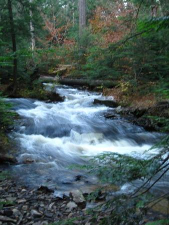 Wilkes-Barre, PA: Rickets Glen State Park