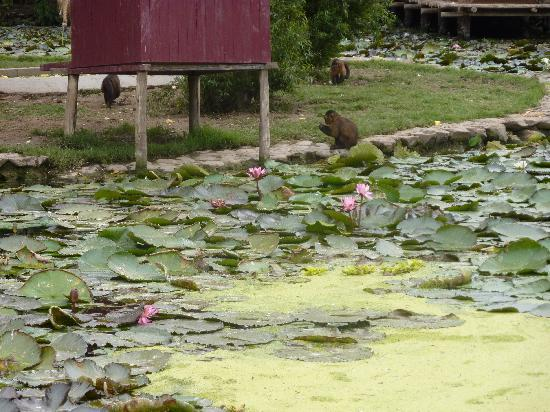Parque de las Leyendas (Zoo): la laguna de los monkeys