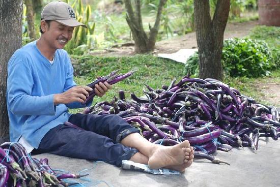 de Daunan Home and Garden Guest House: Preparing the produce for market