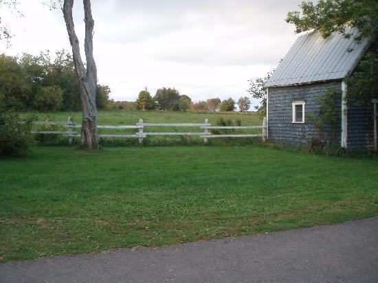 WillowGreen Farm: view of the backyard