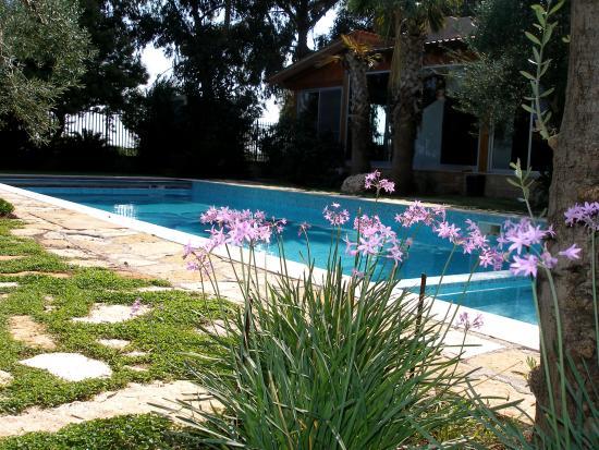 Bisceglie, Italia: bordo piscina
