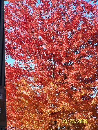 Fireside Inn & Suites Portland: Ahh the colors!