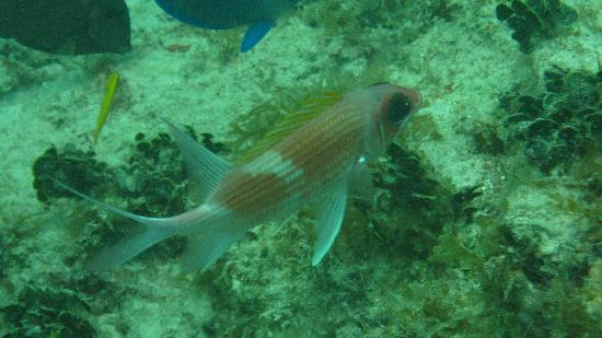 Grand Case, Saint-Martin : another neat fish