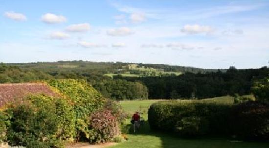 Gospel Oak Bed and Breakfast: Gospel Oak - View of Ashdown Forest