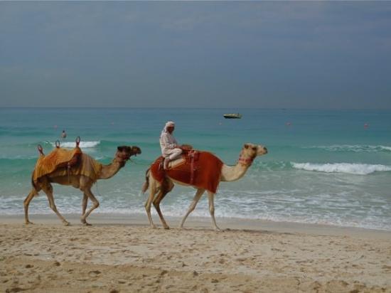 Jumeirah Public Beach: Jumeirah Beach