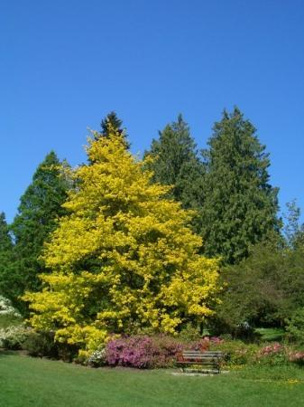 Washington Park Arboretum: These are the lovely sights at the Washington Arboretum