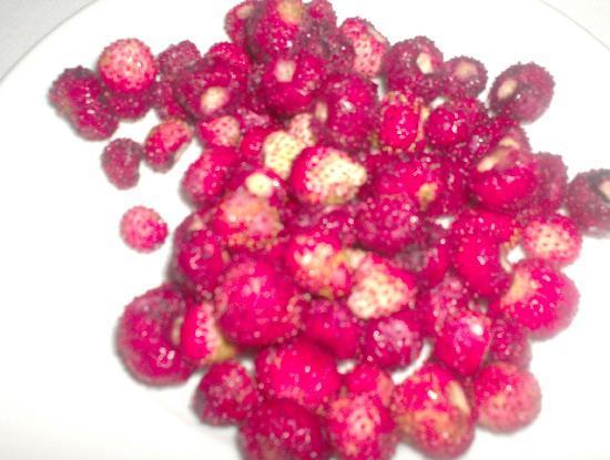 Trattoria Sostanza: 'Frais des bois' (wild strawberries for dessert).