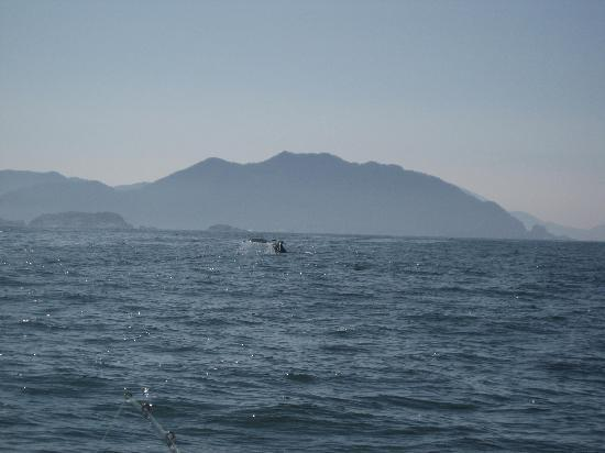 Talon Lodge & Spa: Humpback Whale outside Kruzof Island