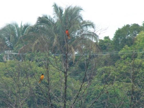 Villas Nicolas: Birds