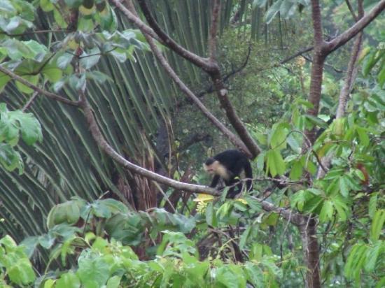 Villas Nicolas: Monkey