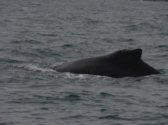 Planet Dolphin Cruises: Whale