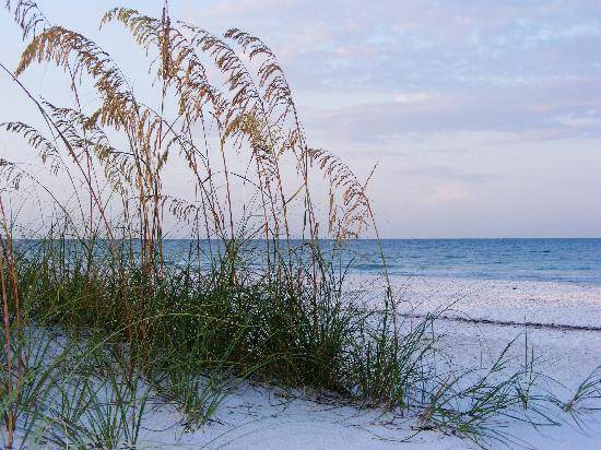 Anna Maria Island Fl Beach And Sea Oats