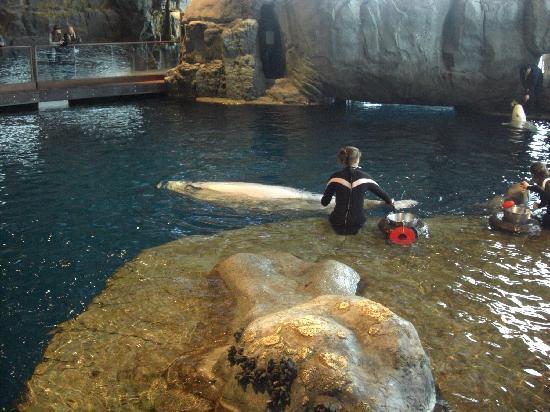Chicago, IL: A great aquarium