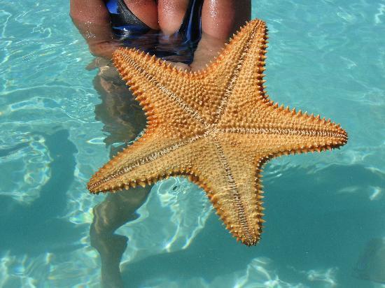 Royal West Indies Resort: Starfish