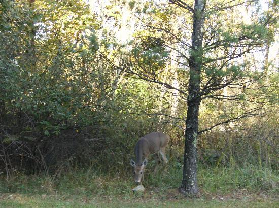 Super 8 Summersville: Deer beside road