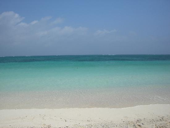 青い珊瑚礁 - 久米島町 久米島、はての浜の写真 - トリップアドバイザー