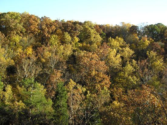 Clifty Falls State Park: The leaves