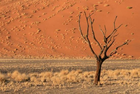 Bilde fra Swakopmund