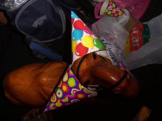 نومادس فات كاميل - هوستل باك بيكر: No one parties like a camel parties